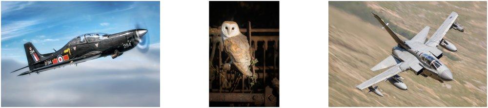 Award winning wildlife photography, Chris Chambers photography, Awarded photographs