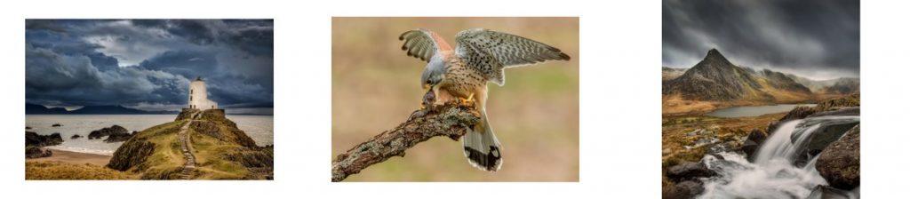 Wildlife and landscape photography, Award winning wedding photography, Bronze award photography, Yorkshire photographer