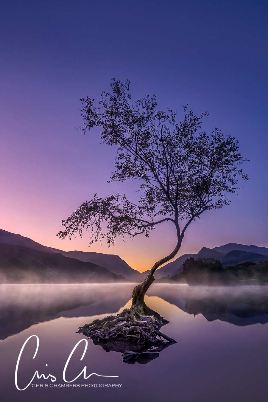 Lone tree at sunrise, Llanberis Snowdonia Wales. Award-winning-landscape-photograph