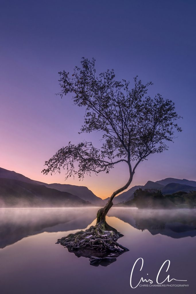llanberis tree North Wales. Snowdonia. landscape photographer of the year